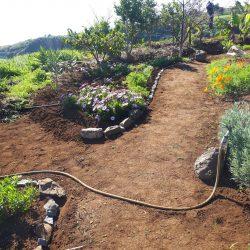 Tuin verder aangeplant met nieuwe paden