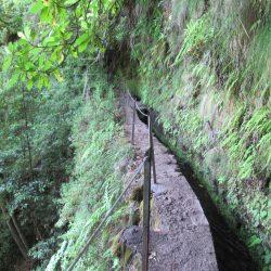 Smalle pad langs de levada met bemoste groene wanden