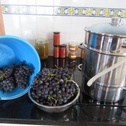 Een hele emmer vol druiven worden ontsapt.